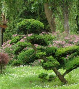 Niwaki : La zen attitude japonaise s'invite au jardin