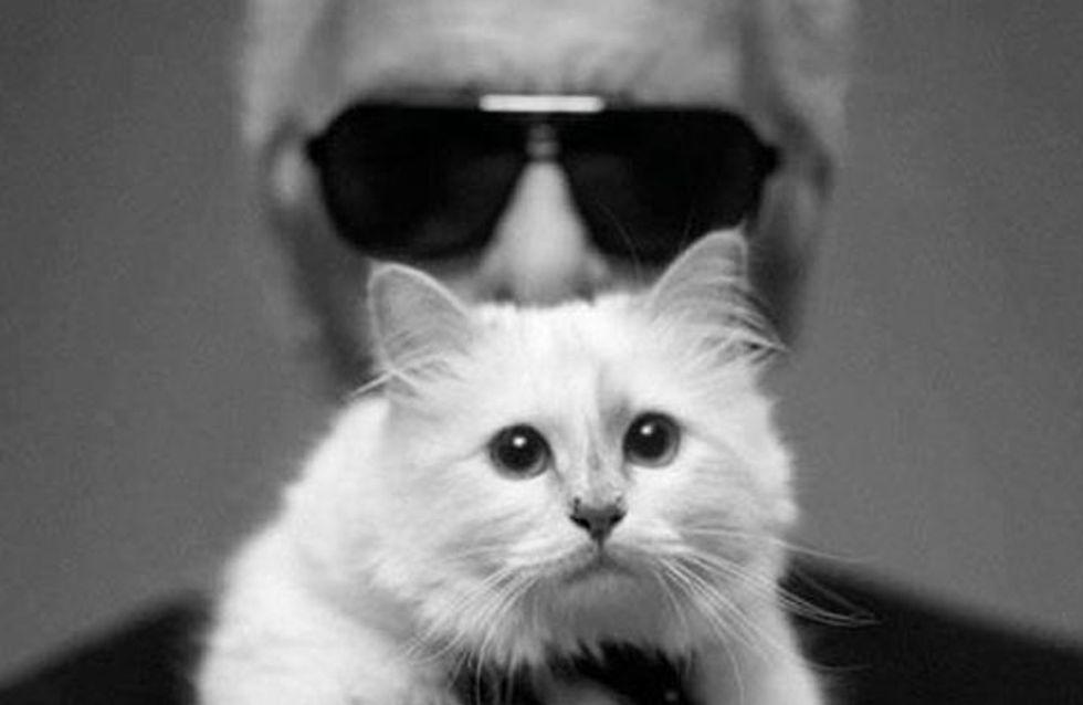 Geht's noch? Karl Lagerfeld will seine Katze heiraten