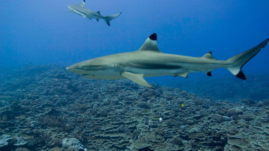 Une adolescente tuée par un requin à la Réunion