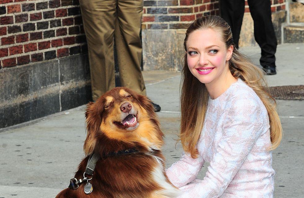 Amanda Seyfried : Son nouvel accessoire mode ? Un chien !