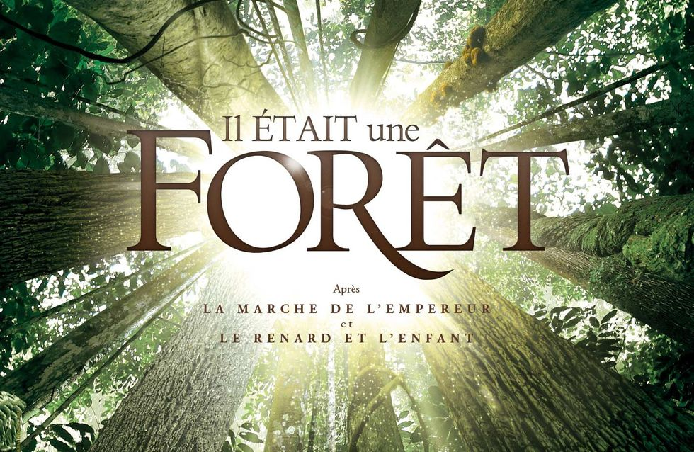 « Il Était une forêt » : les forêts primaires, émouvantes et menacées.