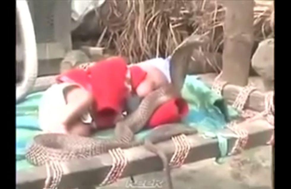 Insolite : Un bébé gardé par 4 cobras (vidéo)