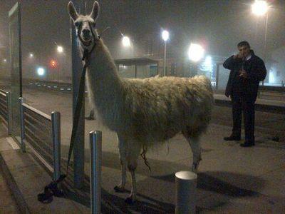 Serge le Lama qui a fait le buzz