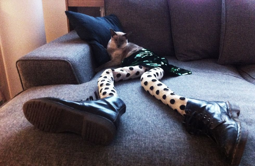 Meowtfit : Ou comment ridiculiser son chat avec des collants (Photos)