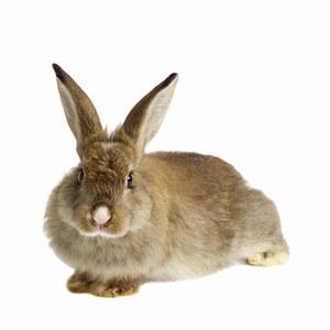 Topshop & H&M veulent protéger les lapins