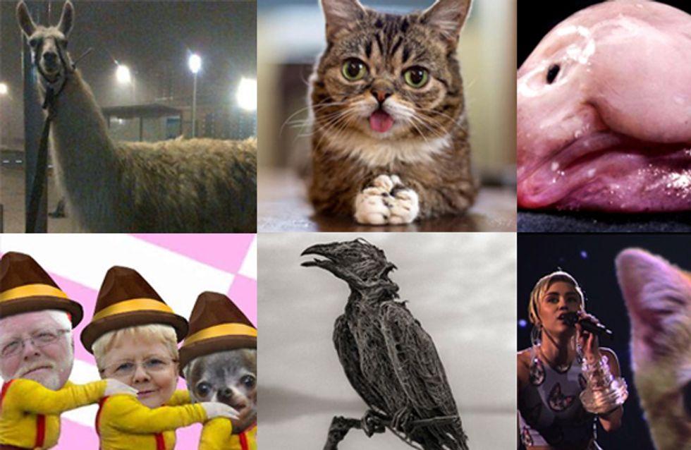 Top 30 des animaux stars de l'année 2013