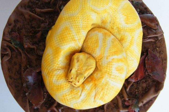 La torta a forma di pitone giallo