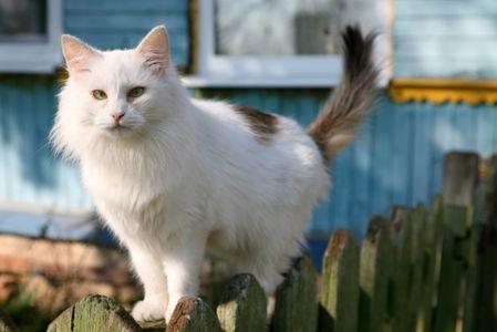 Un chat retrouve ses maîtres après 10 ans d'absence