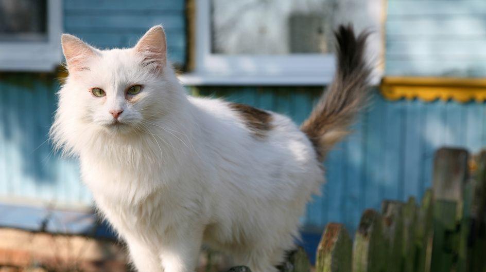 Happy End : Dix ans après sa fugue, un chat rentre chez lui