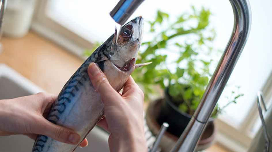 How To Fillet A Fish Like A Pro In 8 Easy Steps