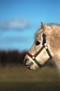 10 photos de chevaux trop mignons