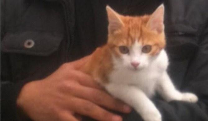 Oscar le chaton
