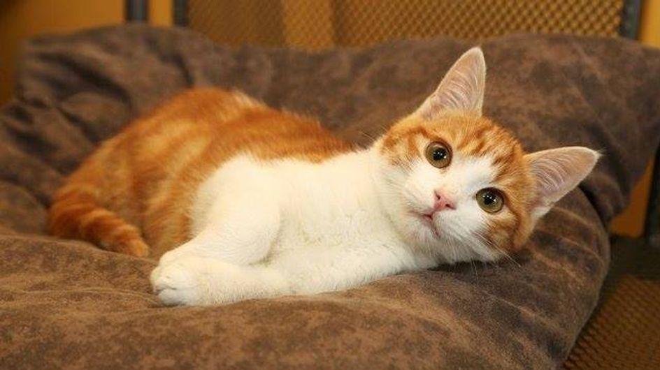 Oscar le chat : Manifestations contre son tortionnaire Farid Ghilas