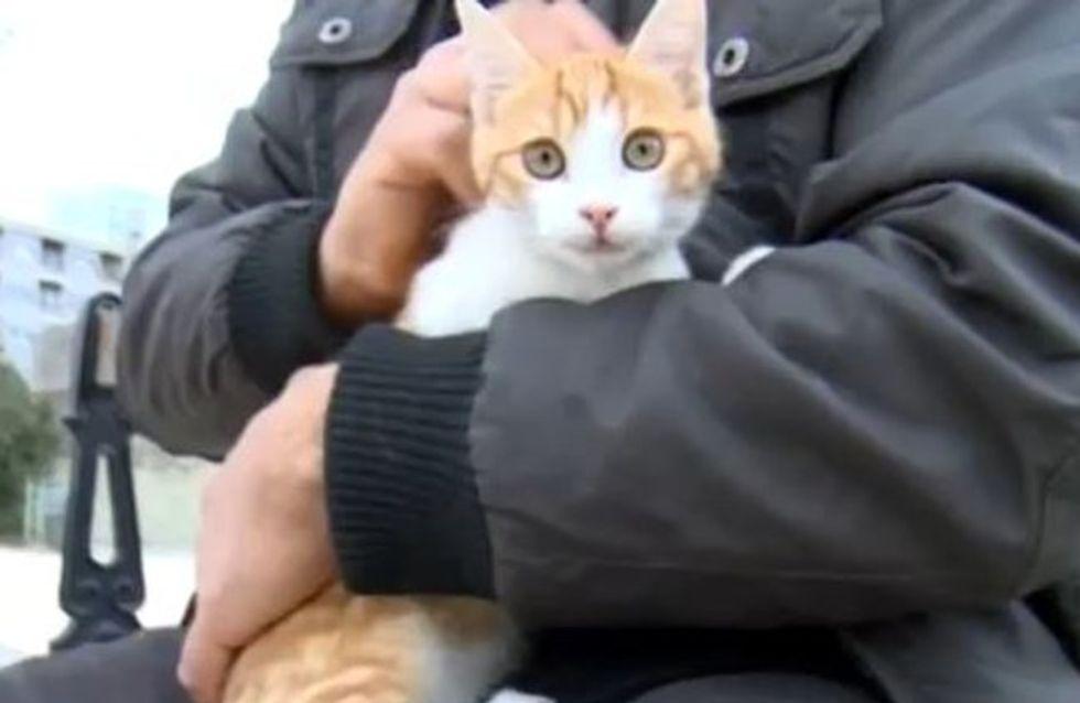 Oscar le Chat : Son tortionnaire condamné à un an de prison ferme
