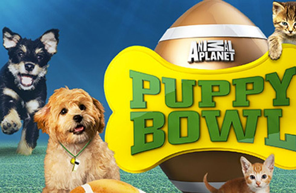 Cutest moments from Puppy Bowl X