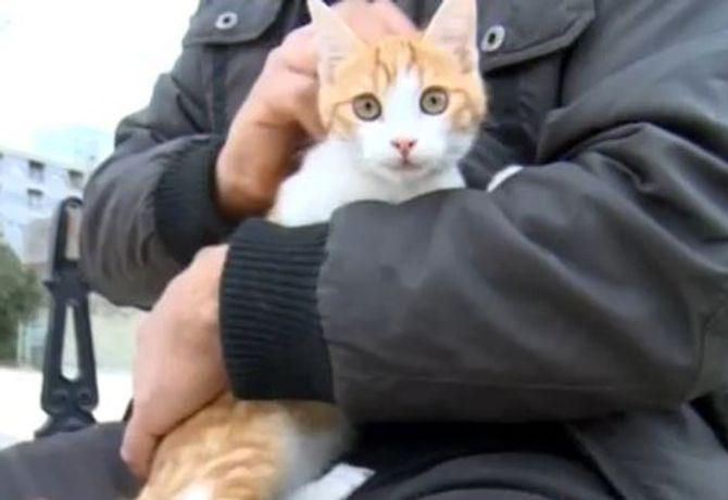 Oscar le chat