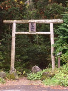 Aokigahara Forest - La foresta dei suicidi
