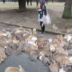 Se faire courser par une armée de lapins, ça peut t'arriver à toi aussi (Vidéo)