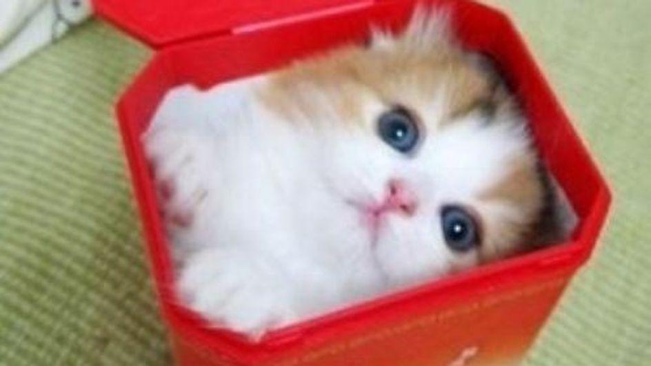 Weinglas, Toaster, Klo: Diese 18 Katzen passen überall rein!