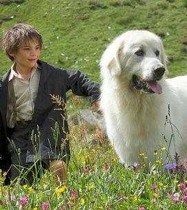 Les animaux les plus attachants du cinéma