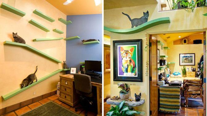 Bienvenue dans la maison des chats
