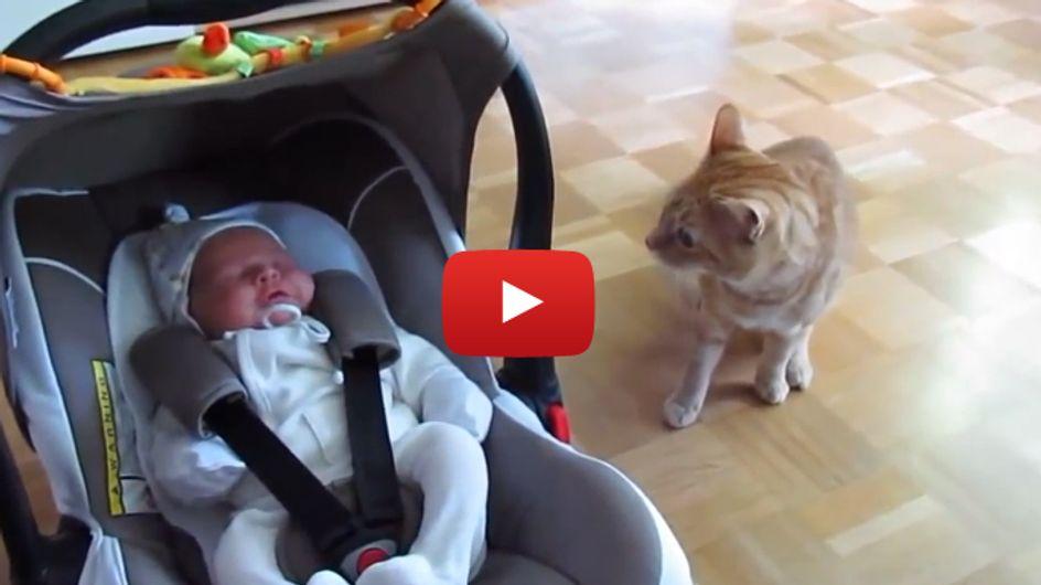 Hallo, wer bist du denn? So süß reagieren Katzen auf Babys