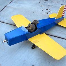 Y a-t-il un écureuil pour piloter l'avion ? (vidéo)