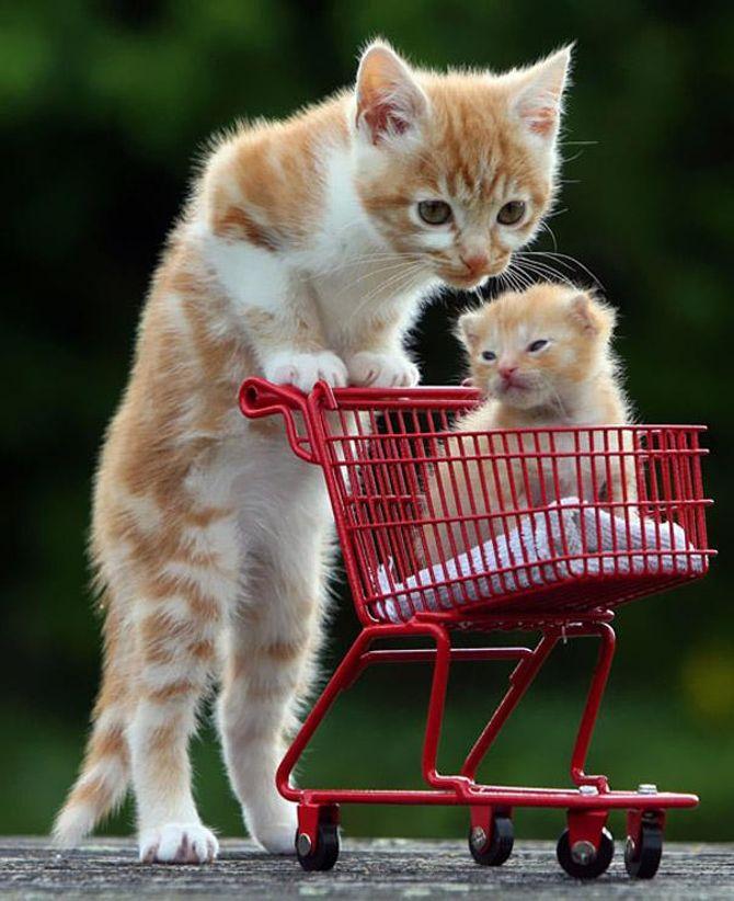 mamma gatta col carrello