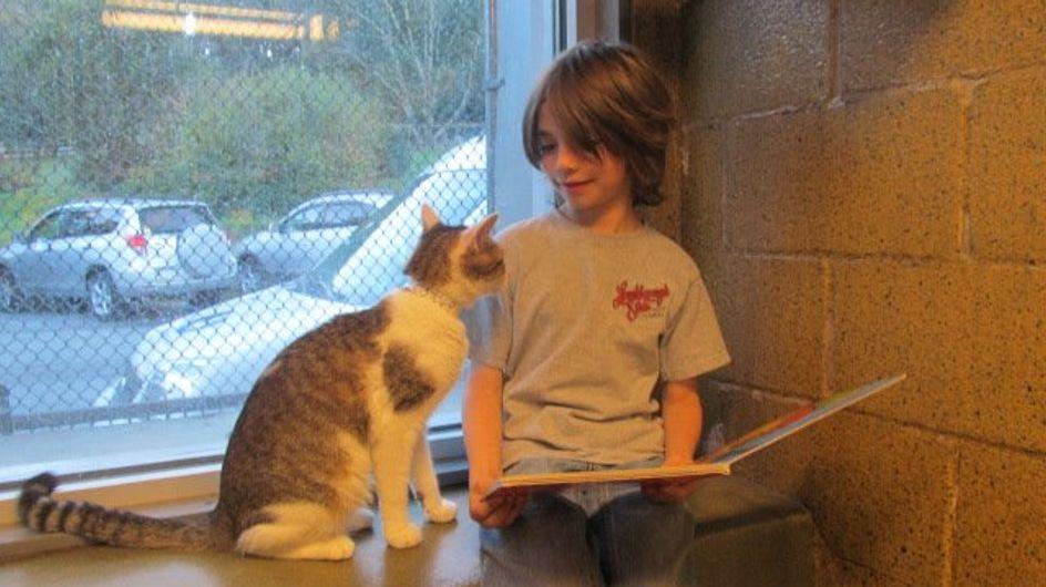 Momentos tiernos: unos niños aprenden a leer junto a gatitos abandonados