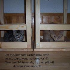 Les animaux prennent d'assaut les réseaux sociaux pour répondre à Hollande
