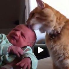 E tu chi sei?, le divertenti reazioni dei gatti quando vedono un bebè per la prima volta