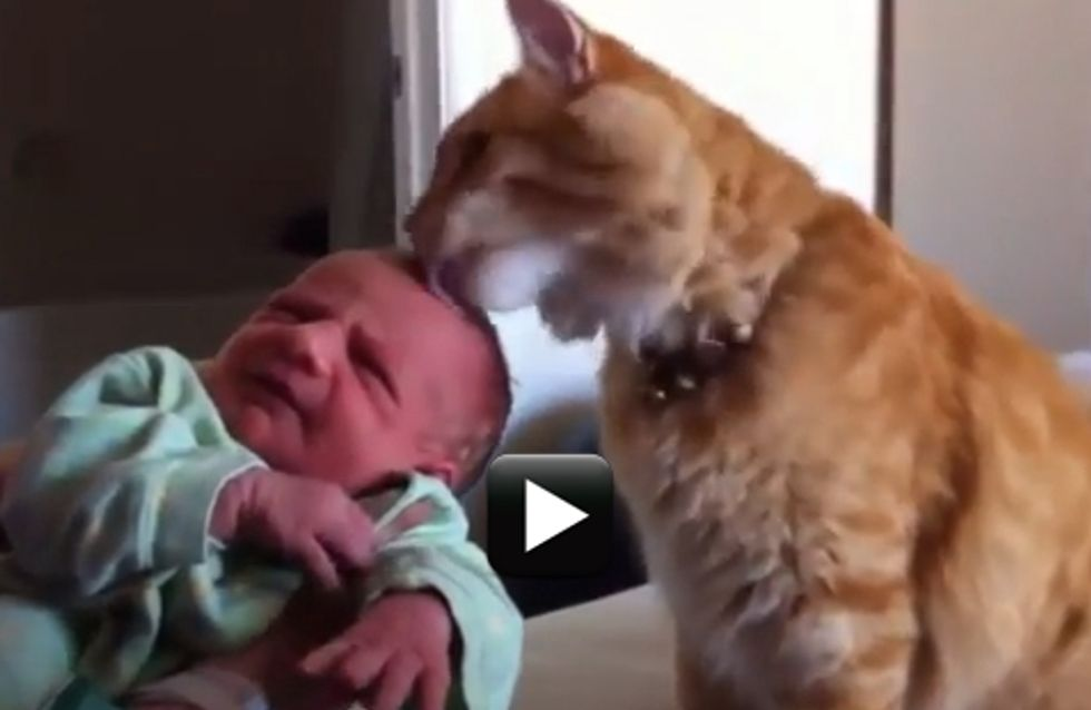 """""""E tu chi sei?"""", le divertenti reazioni dei gatti quando vedono un bebè per la prima volta"""