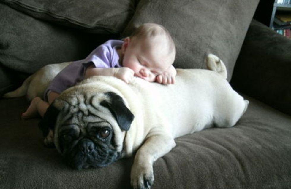 Einfach zum Knuddeln! Wenn Babys mit Hunden schmusen...