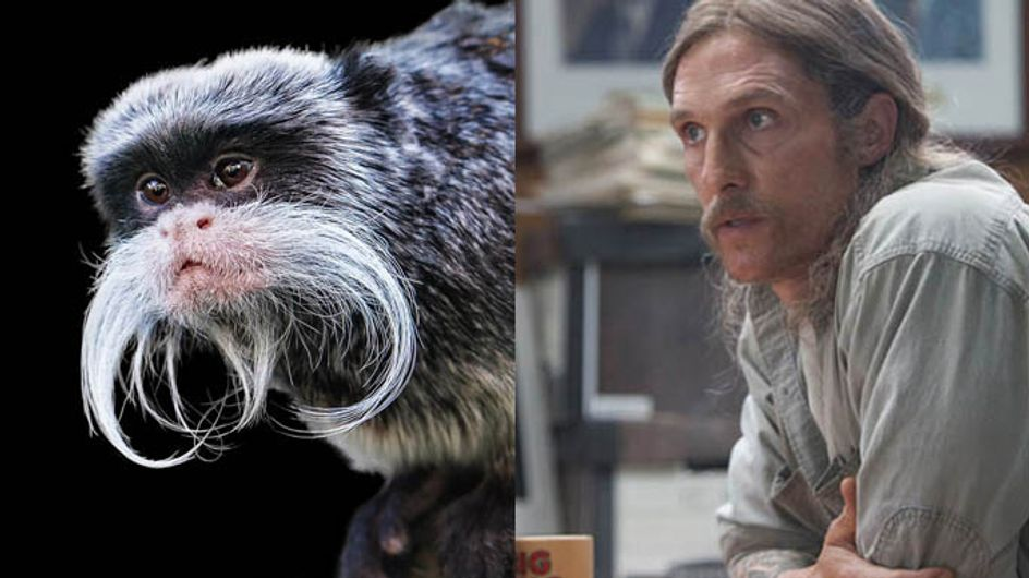 Animals And Celebrities That Could Be Related