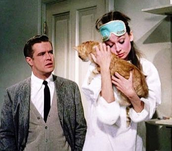 8 raisons de préférer ton chat à ton mec !