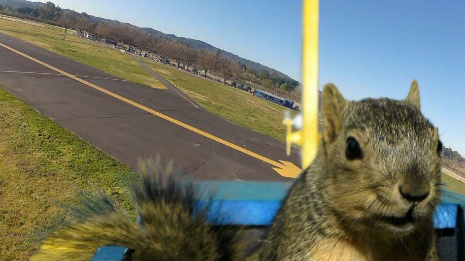 Anche io voglio volare! Uno scoiattolo ruba un aeroplanino e sfreccia nel cielo come un vero pilota