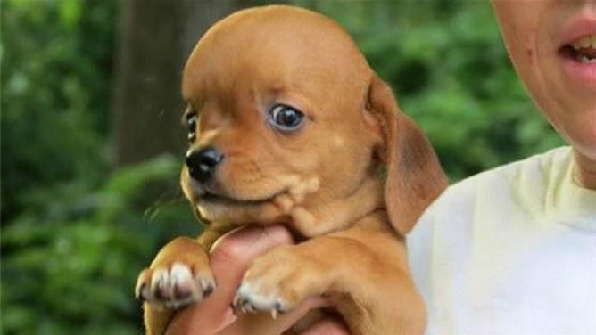 Frank, el cachorro enfermo