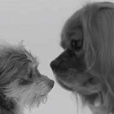 First Kiss : les parodies alléchantes de la vidéo