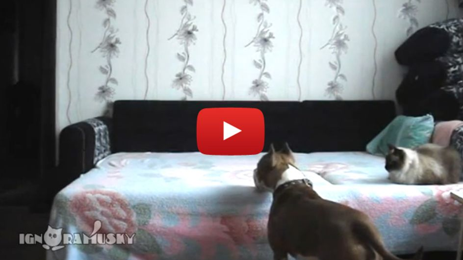 Dieser Hund darf nicht ins Bett. Doch was passiert, wenn Frauchen das Haus verlässt?