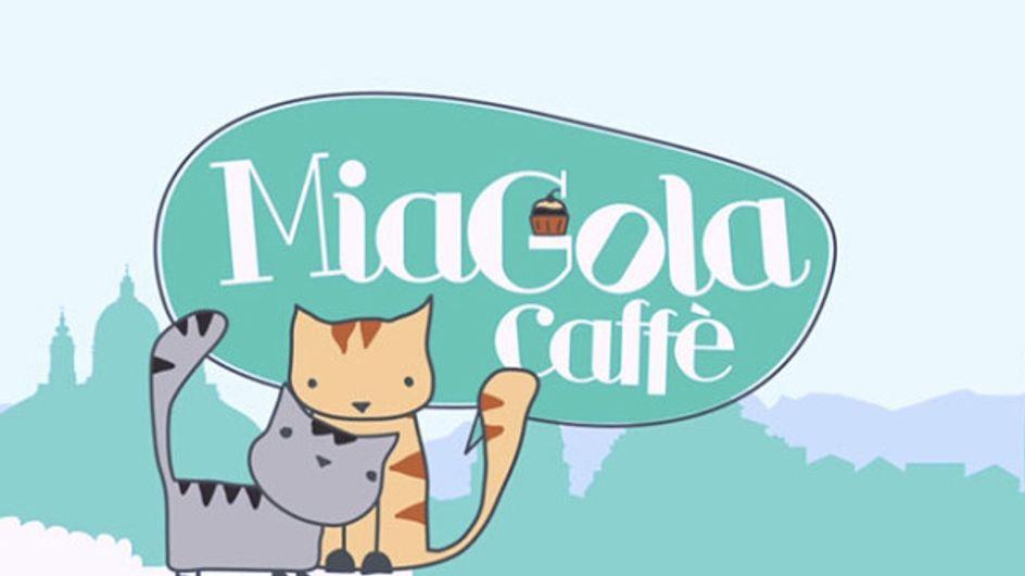 A Torino il primo cat cafè italiano