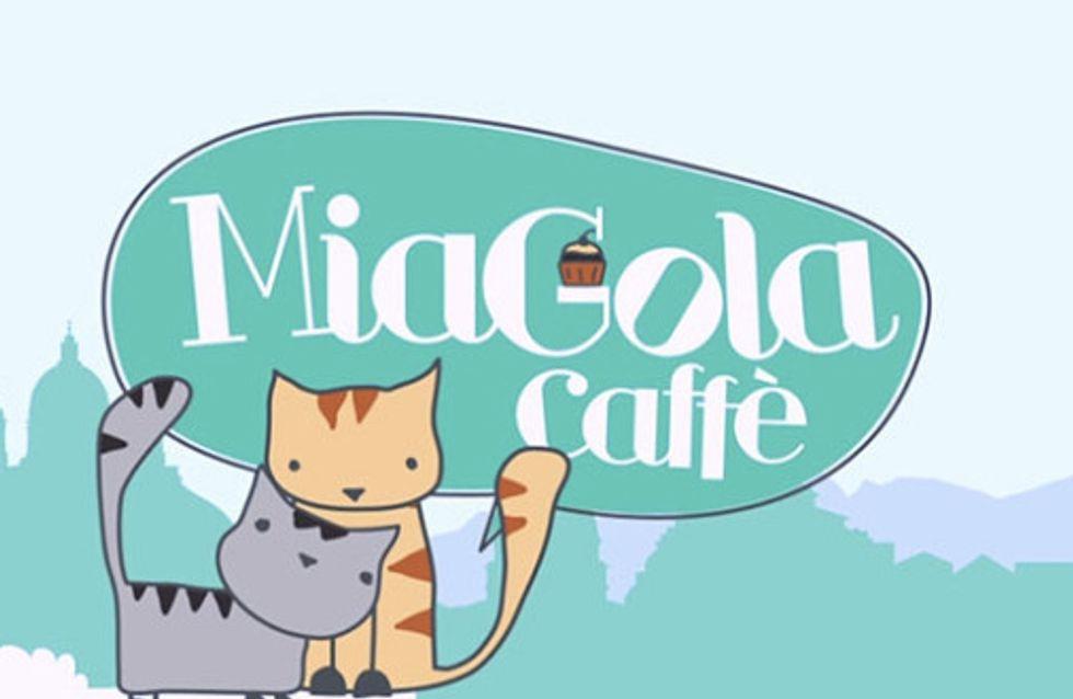 """A Torino il primo """"cat cafè"""" italiano"""