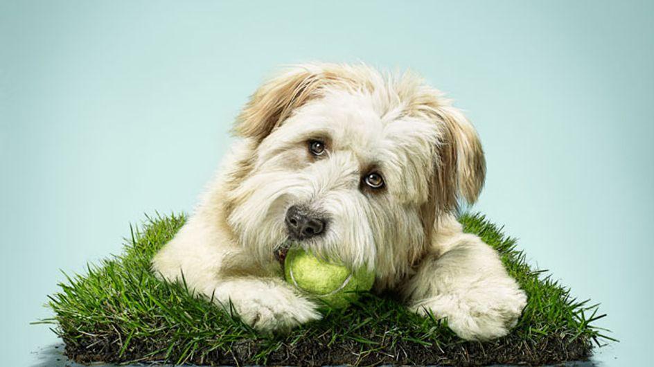 ¿Te gustan los perros? Momentos épicos del mejor amigo del hombre