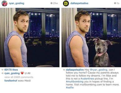 Un chien photobomb Ryan Gosling !