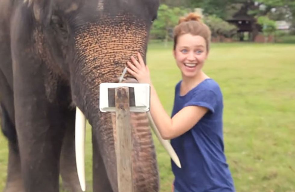 Ja, Elefanten sind clever. Aber dieser hier ist einfach unglaublich ...