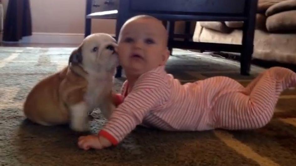 Découvrez le coup de foudre d'un chiot pour un bébé (vidéo)