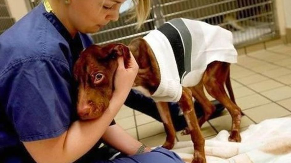 How A Dog Left For Dead Was Loved Back To Life