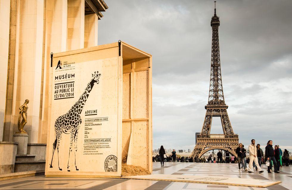 Des animaux sauvages dans Paris !