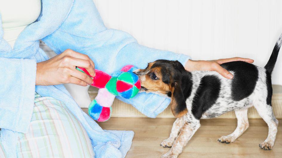 Un chien plutôt qu'un bébé : Le choix de plus en plus de femmes...
