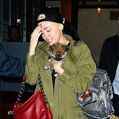 Lebwohl Moonie! Miley Cyrus gibt ihren Welpen weg