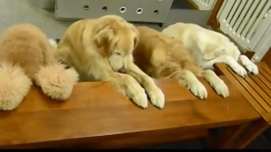 Vor dem Essen wird gebetet und danach abgewaschen: Diese Hunde wissen, was sich gehört